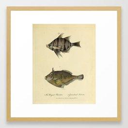 Fish by Sarah Stone, 1790 Framed Art Print