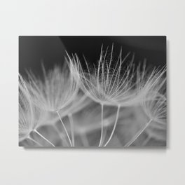 Dandelion Closeup in Black White Metal Print