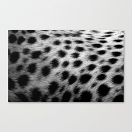 Cheetah Spots Canvas Print