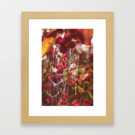 Dew Drops, Spider Webs and Apples, Oh my! Framed Art Print
