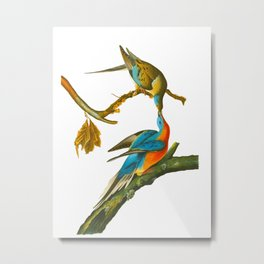 Passenger Pigeon Metal Print