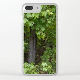 Forest Photography, Trail of Tears, Golconda Illinois Clear iPhone Case