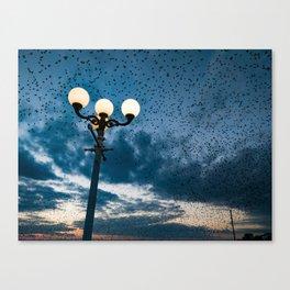 A murmuration of starlings (II) Canvas Print