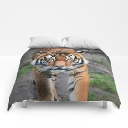 The Bengal Tiger Comforters