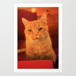 Cat in Red with milk mustache Art Print