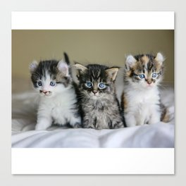 Cats Make Me Happy So Much Canvas Print