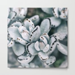 Blue soft and delicate cactus Metal Print