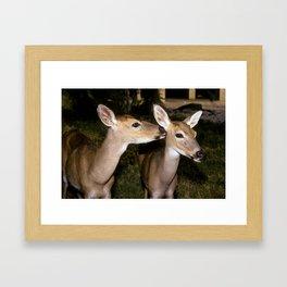 Florida Key Deer Framed Art Print