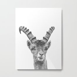 Black and white capricorn animal portrait Metal Print
