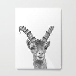Black and white capricorn animal portrait Metal Print