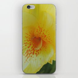 Yellow Canna Lily in Bloom iPhone Skin