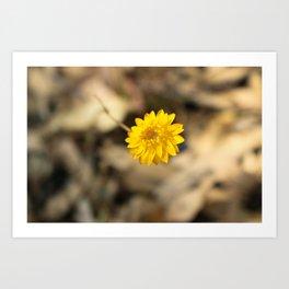 Golden Strawflower Art Print