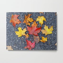 Colors of Fall Metal Print