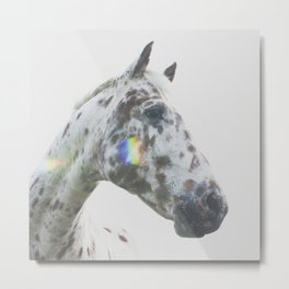 THE SPOTTED HORSE Metal Print