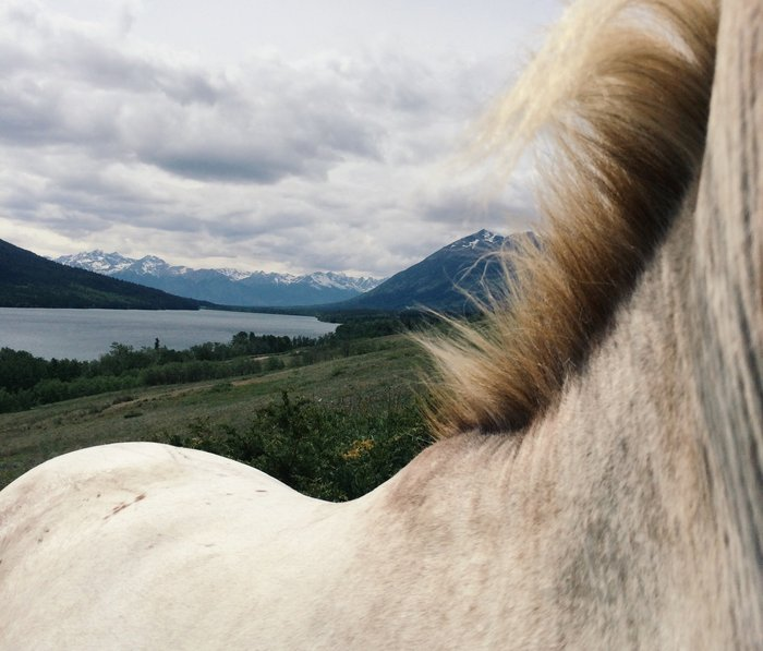 Horse Back Metal Travel Mug