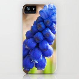 Grape Hyacinth Photography Print iPhone Case