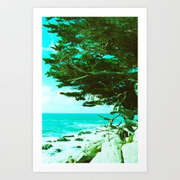 Coastal Cypress Tree // California Art Print
