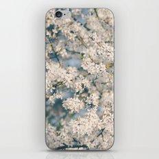 In Full Bloom iPhone & iPod Skin