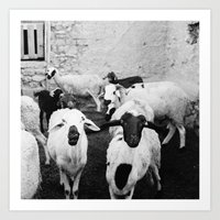 morrocan Art Prints featuring Sheep in Morrocan desert (black & white) by Hanke Arkenbout
