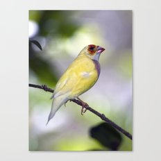 Dressed in Yellow Canvas Print