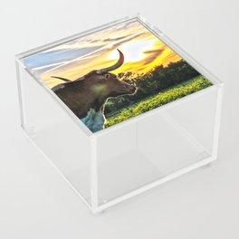 Illuminated Longhorn Sunset Acrylic Box