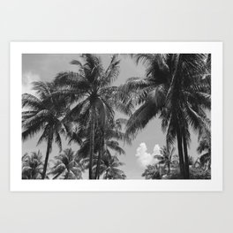 Palm Trees Black and White Photography Art Print