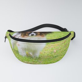 Portrait of a papillon purebreed dog walking on the grass Fanny Pack