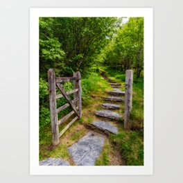 Path Into The Forest Art Print