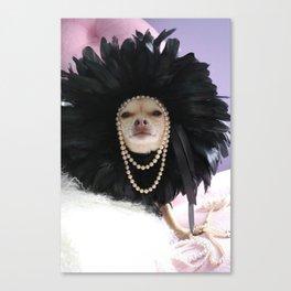 Chihuahua Vogue  Canvas Print