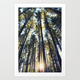 The tall forests of Washougal at sunset Art Print