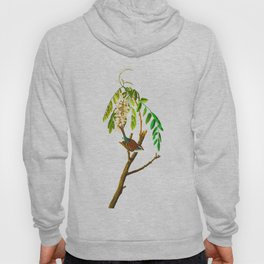 Chipping Sparrow Bird Hoody