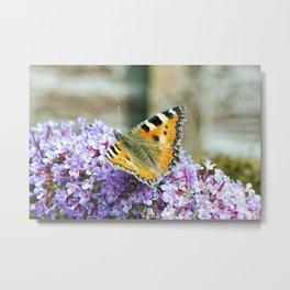 Butterfly IX Metal Print