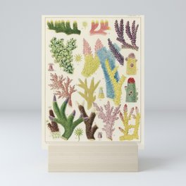 Great Barrier Reef Corals by by William Saville-Kent, 1893 Mini Art Print