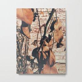 Dead Rose Metal Print
