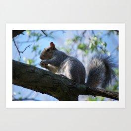 Athens' Squirrel Art Print