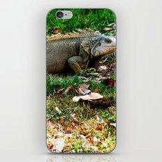 Gallina de palo 2 @ Rincon iPhone & iPod Skin
