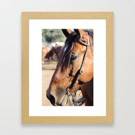 Horse-1 Framed Art Print