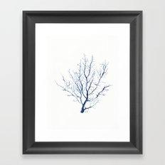 Black coral sea fan Framed Art Print