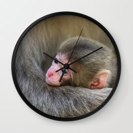 Infant Macaque at Snow Monkey Park, Japan Wall Clock