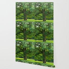 Old green oak Wallpaper