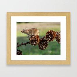 Mousey Framed Art Print