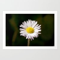 daisy Art Prints featuring Daisy by Lori Anne Photography