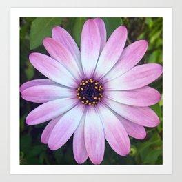 Pink Calendula Art Print