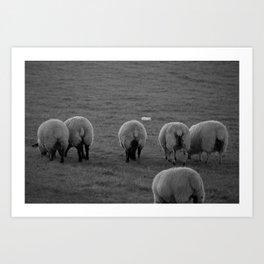 Sheep Bums Art Print
