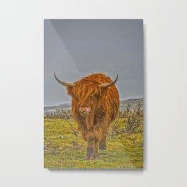 Highland Cow on Bodmin Moor Metal Print