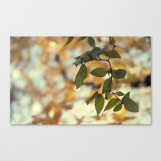 last of the green Canvas Print