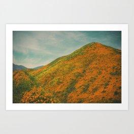 California Poppies 025 Art Print