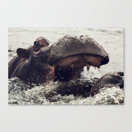 Hippo at Play Canvas Print