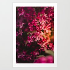 Beauty of Spring Art Print