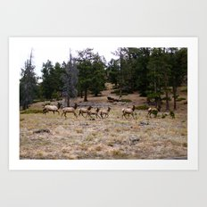 Colorado, wildlife Art Print